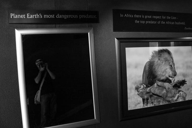Planet Earth's most dangerous predator! Two Oceans Aquarium Cape Town, South Africa