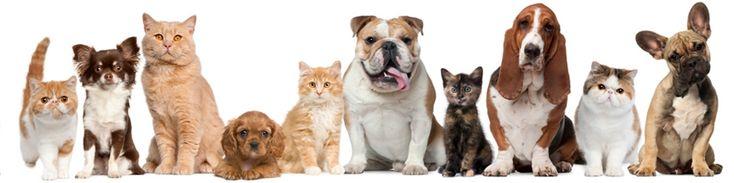 Θέλω να αγοράσω σκύλο - Τι να προσέξω | Σκυλια, Γατες, Ψαρια, Πτηνα, Τρωκτικα, Ολα τα Κατοικιδια Ζωα - All Pets 2016