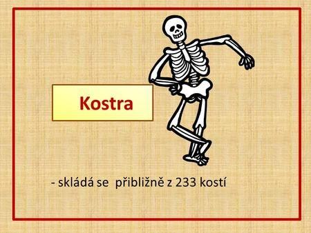 Kostra - skládá se přibližně z 233 kostí.>