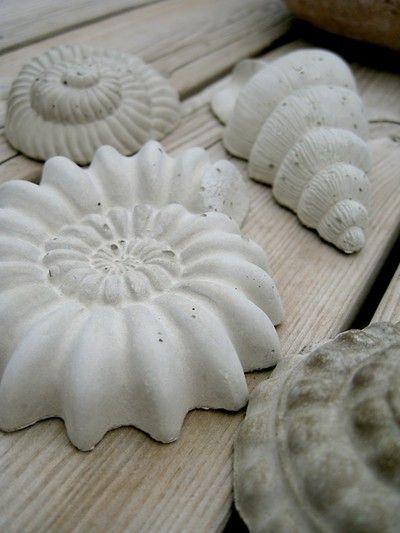 Seashells in concrete