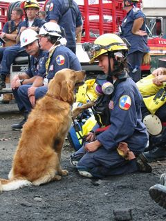 search and rescue dog at ground zero NYC