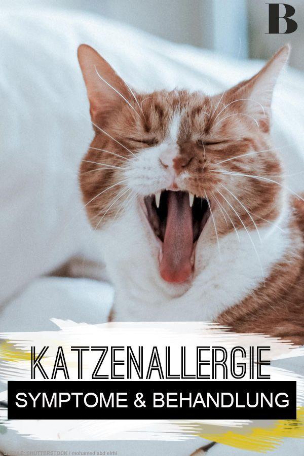 Katzenallergie: Symptome und Behandlungswege