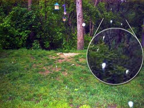 More Real Fairy Pictures & Stories: Do You Believe in ...
