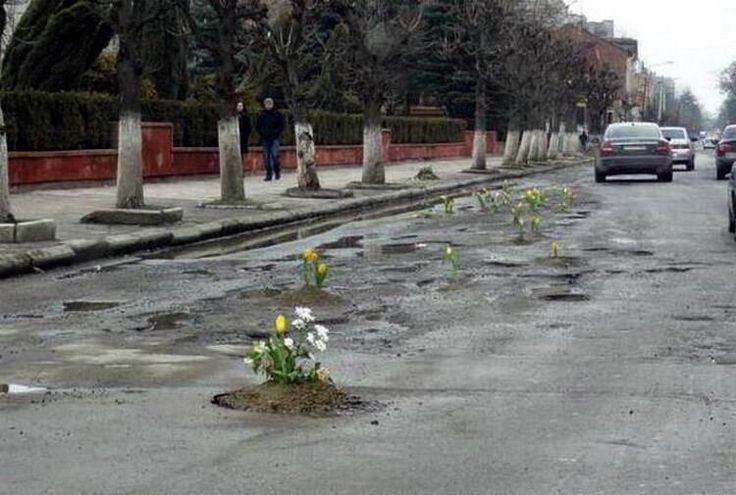 If they won't fix the potholes, plant flowers.