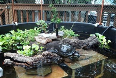 Habitat Examples Brownhill Farm Turtle Enclosure