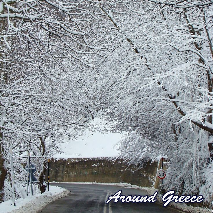 """A beautiful """"tree-snow-tunnel"""" on route to Hania at the top of Mount Pelion.  #Pelion #Greece #Winter #holidays #travel #ski #vacations #Πηλιο #Ελλαδα #διακοπες"""
