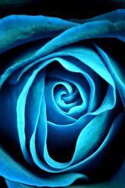 青い薔薇 Blue rose iPhone 4s wallpaper : 薔薇の花 ローズ スマホ壁紙【iphone,Android待ち受け画面】 - NAVER まとめ