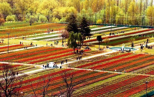 Tulip garden, the largest Tulip garden of Asia.