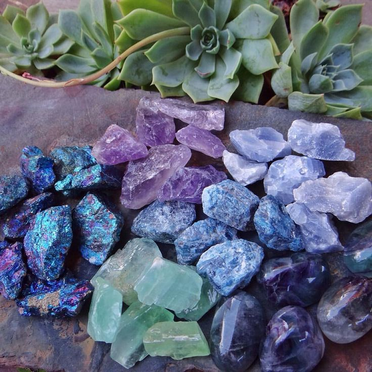 17 Best Images About Succulent Crystal Gardens On