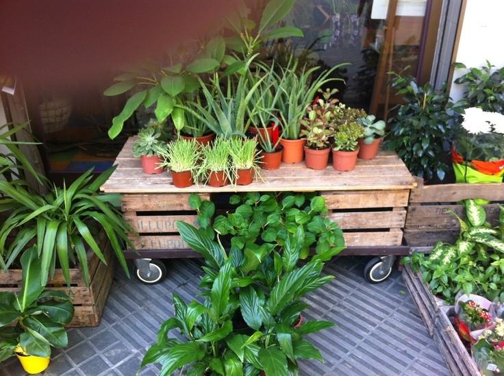 1000 images about crates in the garden on pinterest - Garden center barcelona ...
