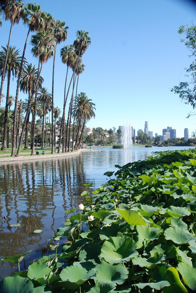 Echo Park Lake, Los Angeles, California, Enjoy a picnic, take in the stellar view of palm trees framing the skyline.