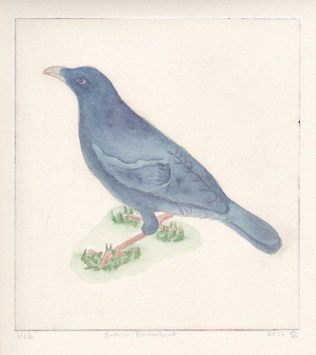 Satin Bower Bird by JessicaParkerArt on Etsy
