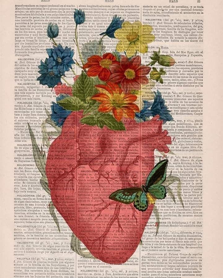 هذا القلب هو خلاصة عالم الملك والملكوت بصلاحه يصلح العالم النية محلها القلب الايمان ما وقر في القلب ا Anatomy Art Butterfly Art Print Human Anatomy Art