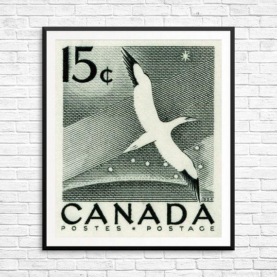 Gannet print, gannet bird, gannet art, big dipper, north star, black and white, bird print, bird lover gift, fine art bird, bird watching