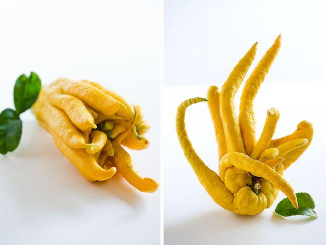 Buddah hand citrus fruit, an amazing scent