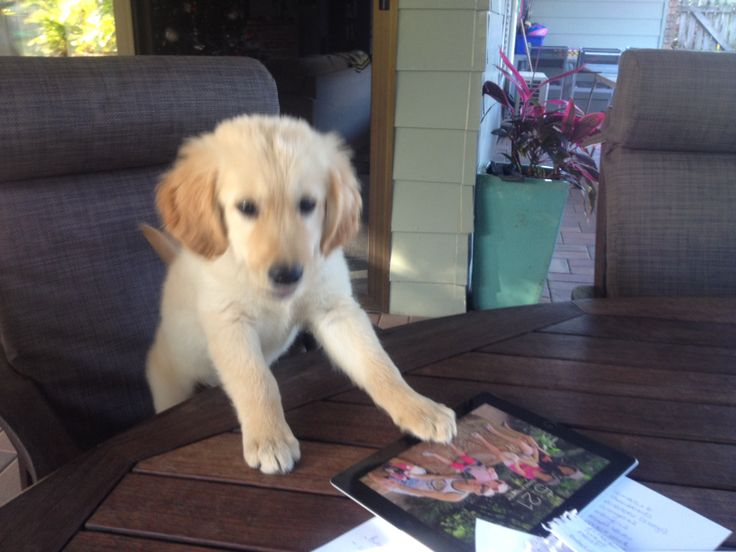 Smart pup