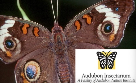 """The Audubon Insectarium is the largest insect museum in the United States! There you will see amazing winged creatures in flight and experience an insect's environment in the """"Life Underground Experience"""" exhibit. You can also experiment with insect cuisine at the Cultural Cafe."""