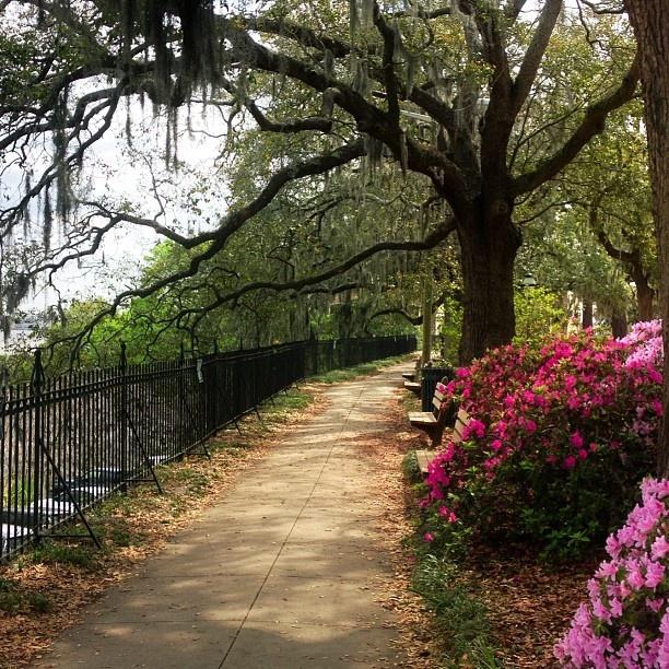 74 Best Images About Savannah On Pinterest Gardens Savannah And Bonaventure Cemetery