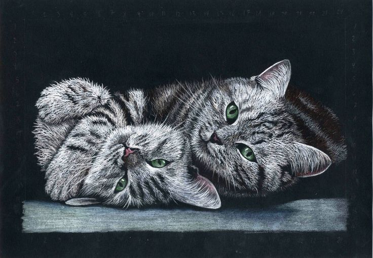 Cats, drawing made whit pastel pincels by Kirstine Wistrup