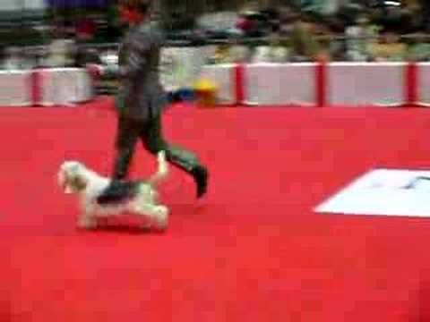 Dog Show Berlin 2008 - Machiavelli Pangea