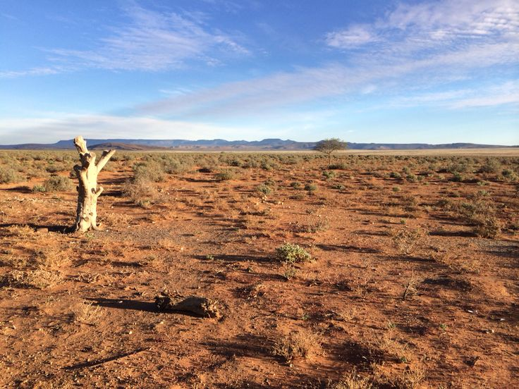 Loeriesfontein desert landscape in Namaqualand, South Africa