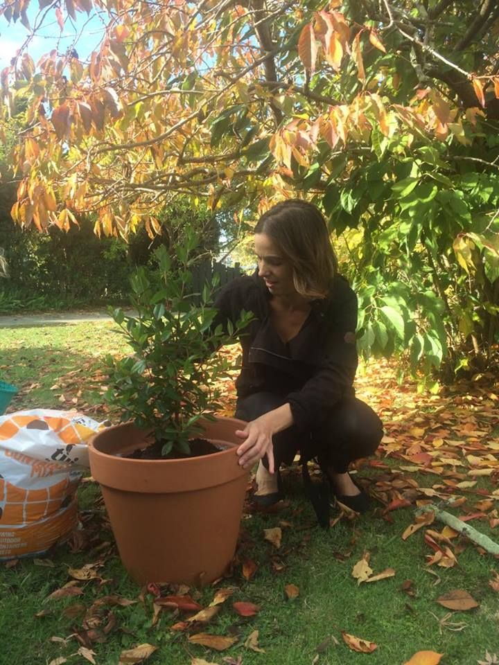 Families are choosing to plant a tree on top of their placenta
