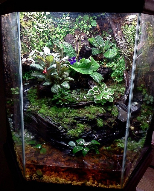 17 best images about gardens aquascaping on pinterest