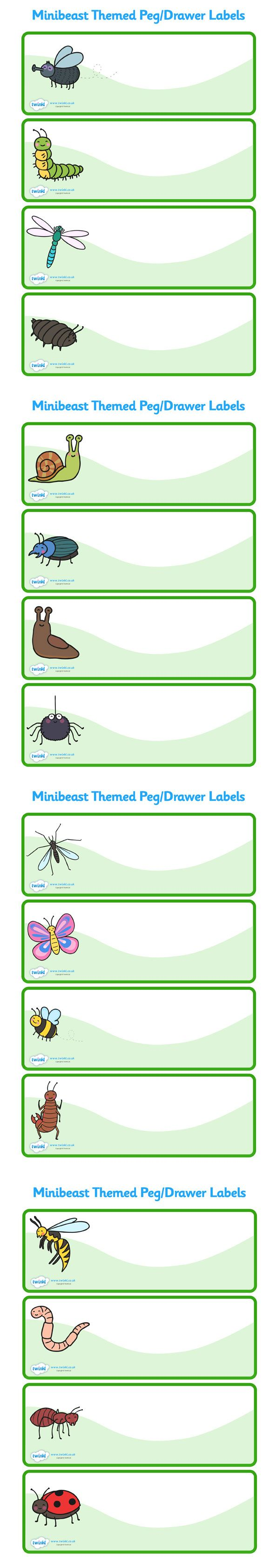Twinkl Resources >> Editable Peg Drawer Labels (Minibeasts)  >> Classroom printables for Pre-School, Kindergarten, Elementary School and beyond! Labels, Drawers, Pegs, Minibeasts,