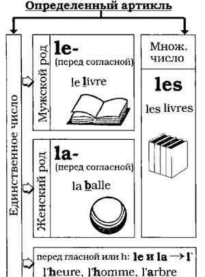 определенные артикли французский язык