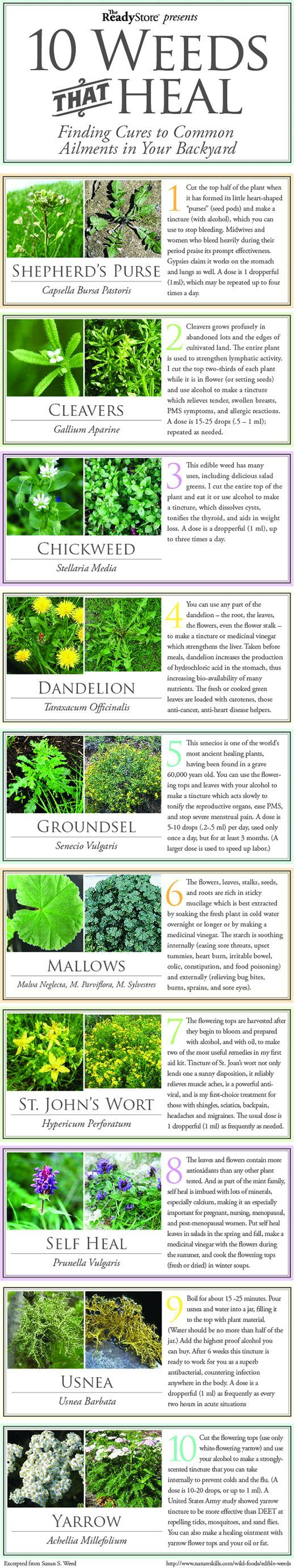 """Permaculture Ideas: 10 """"Weeds"""" (aka Herbs) That Heal"""