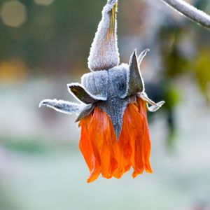 """""""Beginner's Guide to Overwintering: Smart techniques for keeping garden plants alive through the winter."""""""