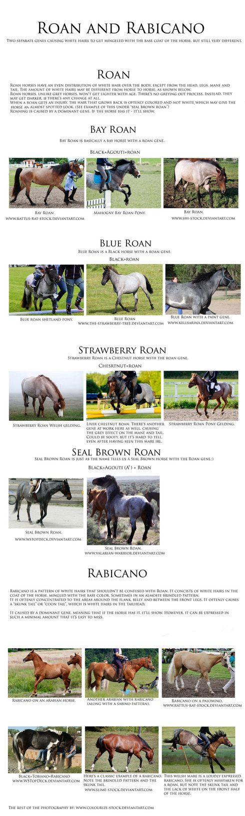 330 best pferdefarben images on pinterest beautiful horses next up genetics chart edit added a whole bunch of stuff im really glad with the response ive had from this eveyone is so friendly and eager to learn nvjuhfo Choice Image