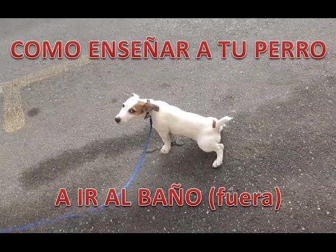 COMO ENSEÑAR A TU PERRO A IR AL BAÑO FUERA, EN LA CALLE. Para este vídeo se entiende que tu perro ya sabe mear en la bandeja o en un absorbedor, dentro de ca...