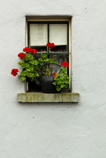 Red Geraniums on A Windowsill | Content in a Cottage