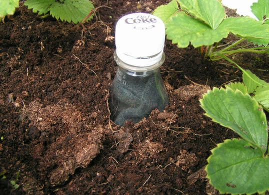 Keep your garden greener with less effort. You won't need to water as frequently if you use this trick for burying a Coke bottle