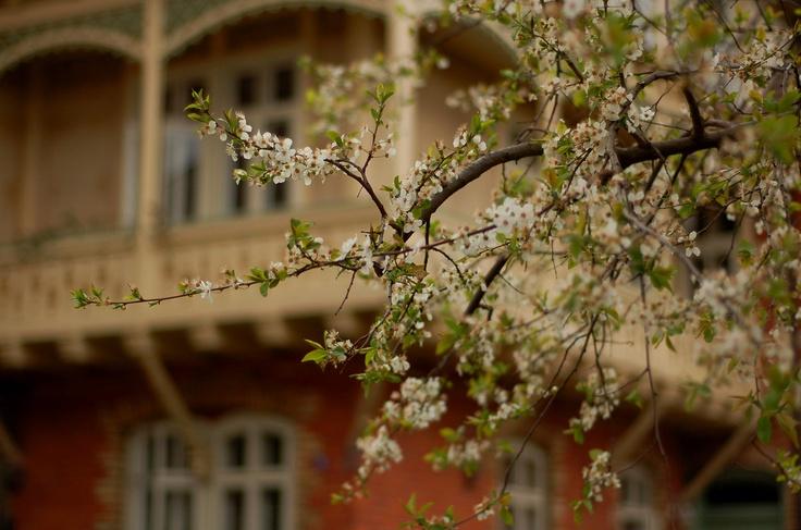 spring in durlach