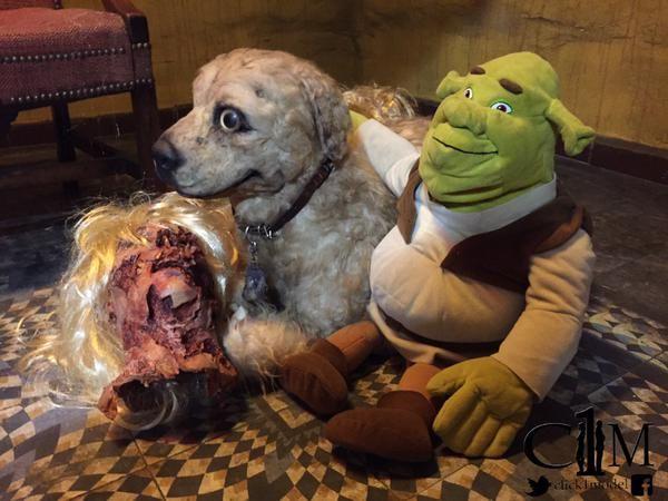 #Advertising Opera Theater Taxidermia de una perra de 8 chichis