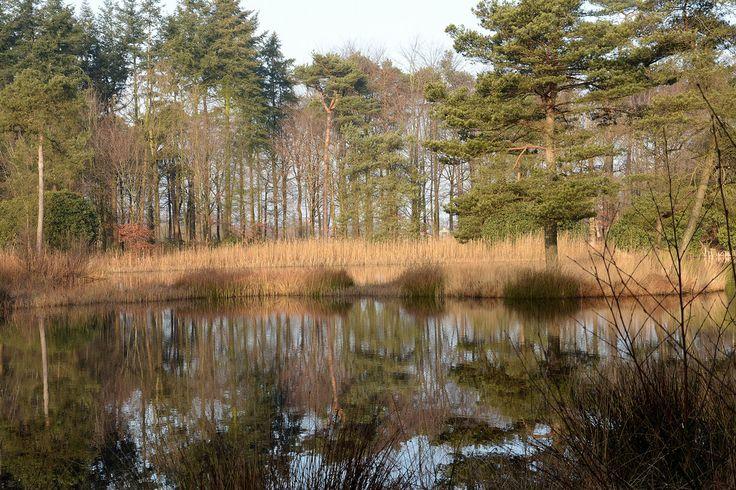 Snoek2009 posted a photo:  Freulevijver:  De Freulevijver ligt in het Oude Bos tussen Wijnjewoude en Bakkeveen. Dit bos is omstreeks 1880 aangelegd door de toenmalige eigenaren van het terrein, de adellijke familie Lycklama à Nijeholt. Het bos werd gebruikt als productiebos en als privépark voor de familie.De oorsprong van de waterpartij in een dijkdoorbraak van het Koningdiep, een kleine rivier die op enkele honderden meters ten noorden van de vijver stroomt. Tegenwoordig staat het bos…