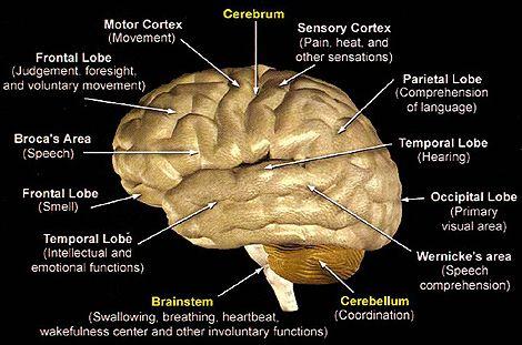 Como Funciona o Cérebro – Documentário completo – Blog do CDPSI