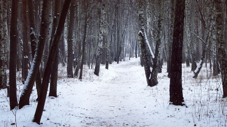 Кременчуг. Район 3-й занасып. Лес, зима.