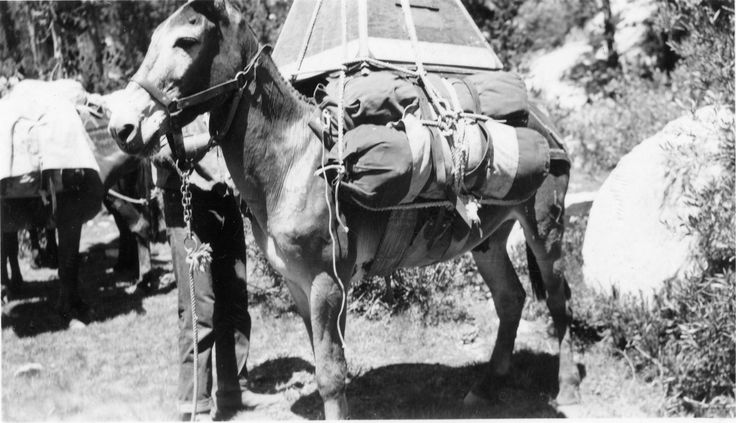 Charley Gilmore on the trail. All photos courtesy of Paul Lamos from the archives of his stepfather, and former MWPT packer, - Bill Smart.  Courtesy: Ray DeLea, www.owensvalleyhistory.com (USA)
