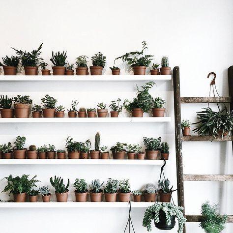 25 best ideas about plant shelves on pinterest cultivo - Mini serra da interno ...
