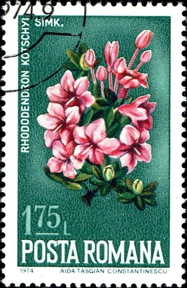 Stamp Azalea (Rhododendron kotschyi) (Romania) (Nature