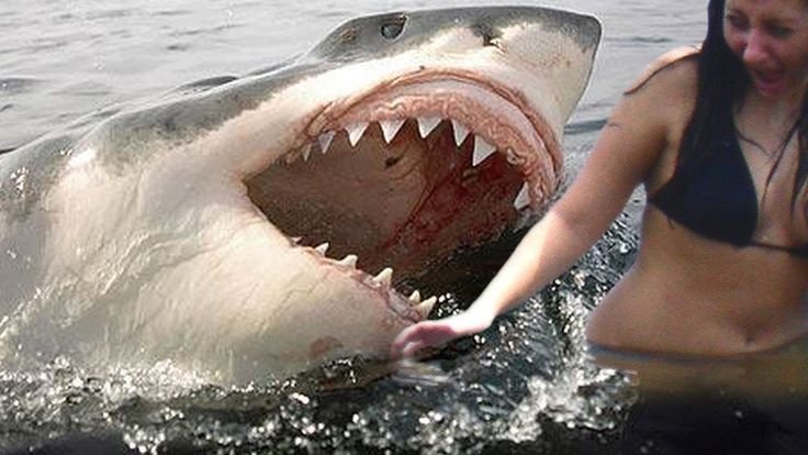Megalodon Facts, Attacks and Sightings - Nat Geo HD Megalodon Documentary