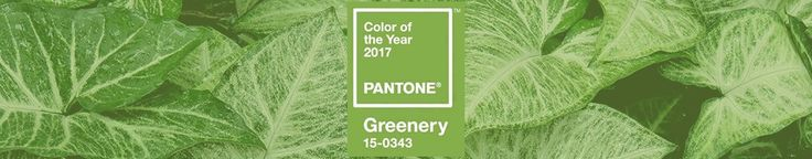 [Greenery] The 2017 Pantone Colour of the Year
