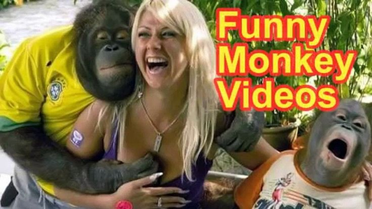 Funny Monkey Compilation 2017 - Funny Monkey Videos (Try not to laugh) -...
