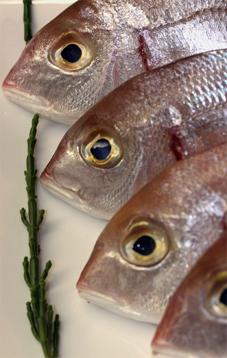 25 best ideas about fish allergy symptoms on pinterest for Allergic reaction to fish