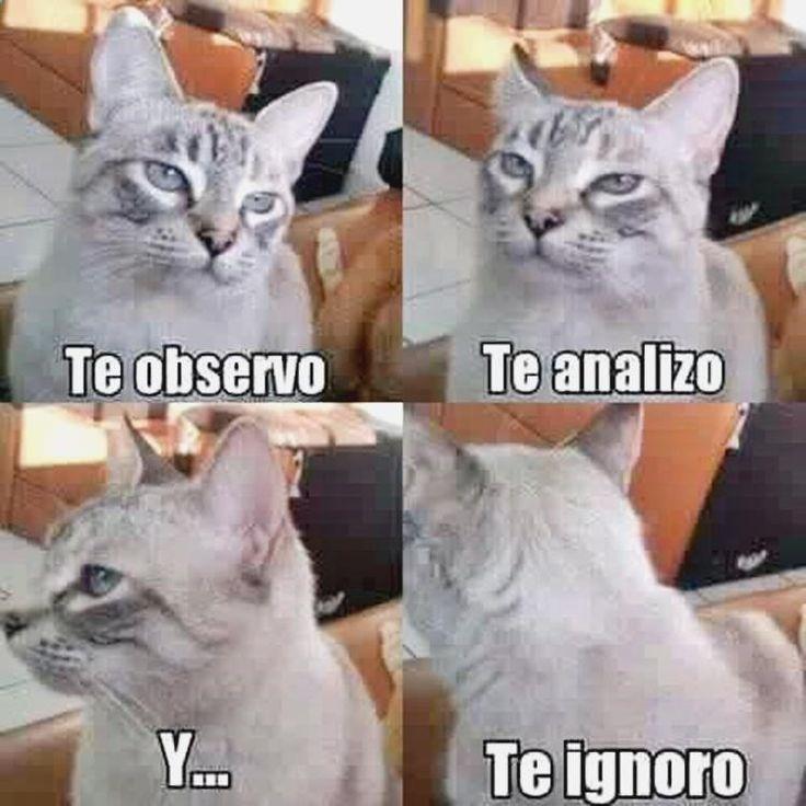 ✓✓✓ Lo mejor en imagenes divertidas para celularimagenes divertidas de amor, imagenes divertidas nuevas para compartir en facebook, anachronism word origin, memes de yoga en español y memes inteligentes ➣➢➣ http://www.diverint.com/humor-grafico-de-adultos-mi-gato-anda-en-malas-companias/