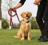 This durable rope leash with a braided nylon collar is perfect for medium to large size dogs such as; Tibetan Mastiffs, Siberian Huskies, German Shepherds, Golden Retrievers, Labrador Retrievers, Alaskan Malamutes, and much more.