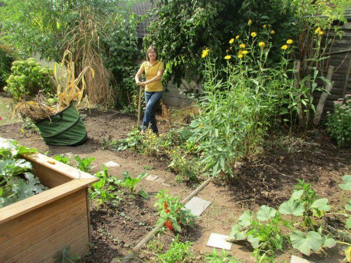 So Entsteht Mein Nutzgarten Teil 9 Geniesserzeit Beetfreunde De Garten Lampionblume Goldrute